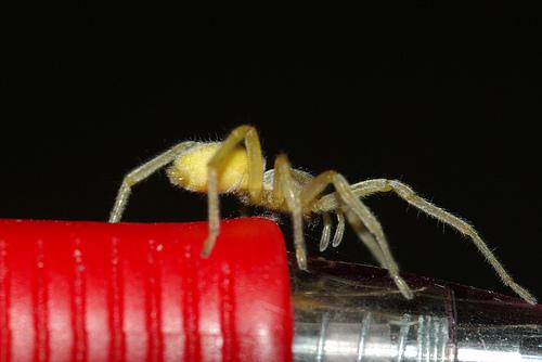 В США автоконцерн Mazda отзывает более 40 тысяч автомобилей из-за.. пауков
