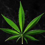 В США откроют первый в мире магазин марихуаны для автомобилистов