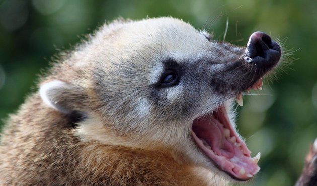 Какие экзотические животные способны стать домашними любимцами?