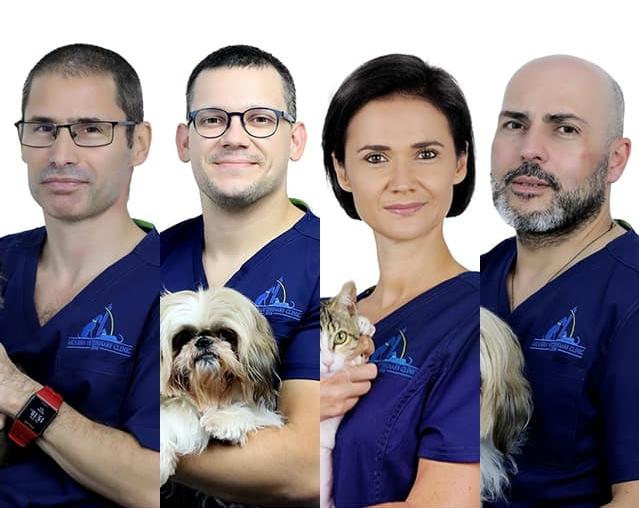 Ветеринарная клиника в Дубаи