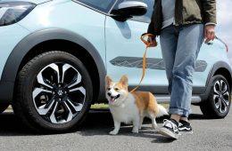 Honda представила линейку аксессуаров для клиентов с собаками
